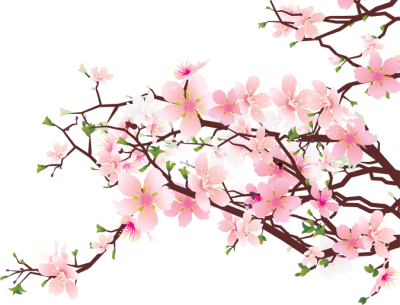 Japanese Flowering Cherry Download Free Image