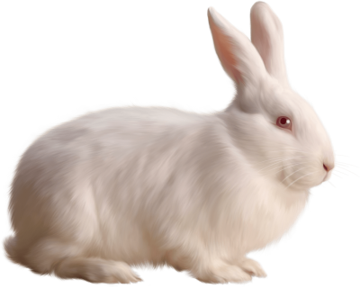 albino-rabbit