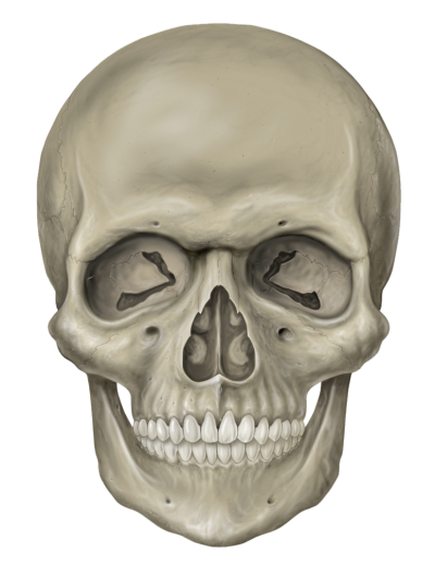 Skull PNG Clipart