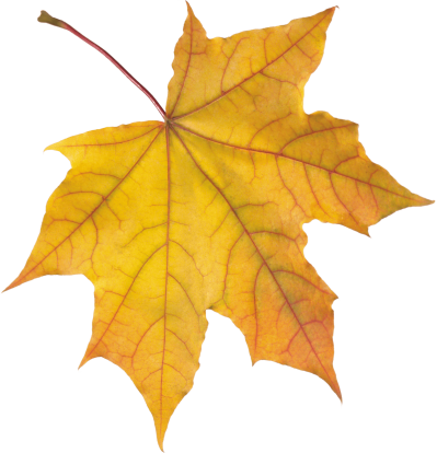 yellow-autumn-leaf