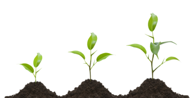 Growing Plant PNG Transparent Image