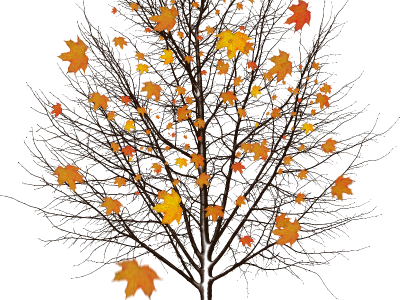 Autumn Tree With Leaves Isolated Object Png (Isolated Objects ...