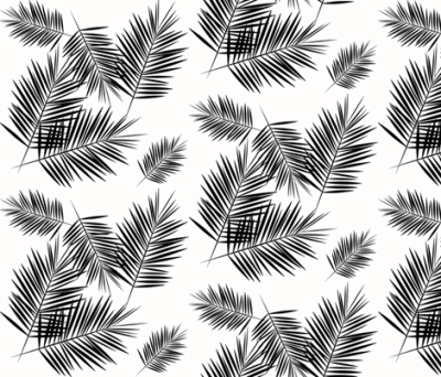 Palm leaf   black and white monochrome palm leaves palm tree ...