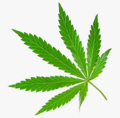 A Piece Of Marijuana Leaves, In Kind, Drug, Green PNG Image and ...