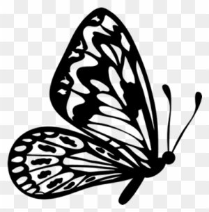 Butterfly outline flying. Download free png clipart