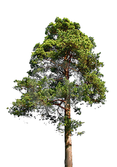Fir-Tree File