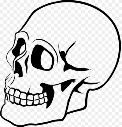 Skull Human skeleton Drawing Bone Art Free PNG Image   Skull,Bone ...