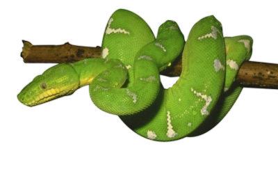Green Snake Photos