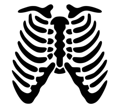 Skeleton Rib Cage SVG PDF PNG Eps Dxf File   Custom Designs ...