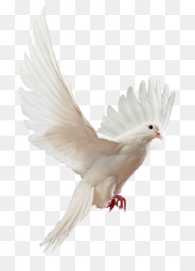 Free download Columbidae Flight Bird Stock photography   DOVE png.