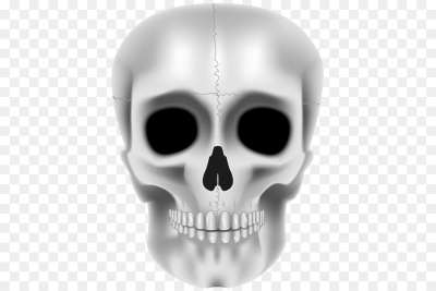 Jaw Skull Skeleton Product design   skull png download   451*600 ...