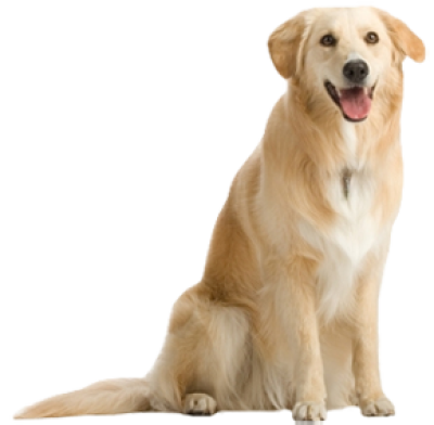 background-Dogs-dog-picture-transparent