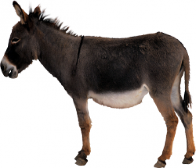 ass-Donkey-background-transparent