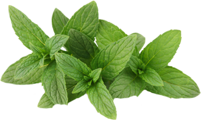 Mint Transparent PNG