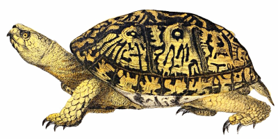 Turtle PNG File