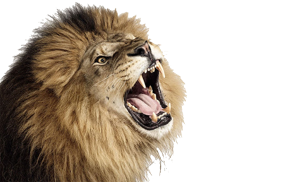 Roaring Lion Photos
