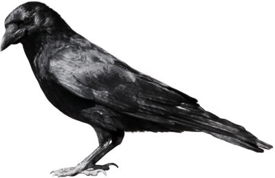 Common Raven PNG File