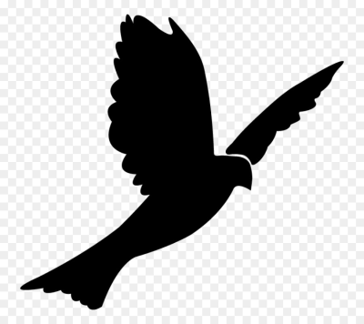 Columbidae Bird Rock dove Silhouette Clip art   Bird png download ...