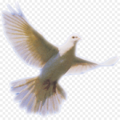 Columbidae Holy Spirit Doves as symbols   Dove Png Clip Art png ...