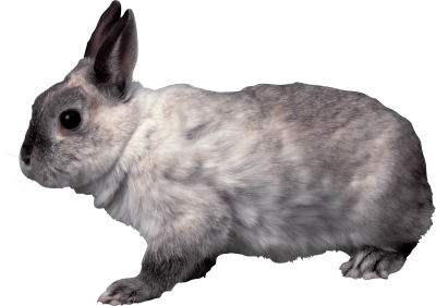 grey-rabbit-sideview
