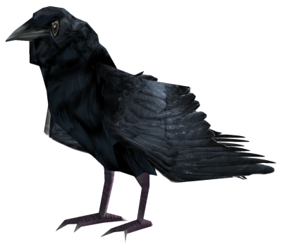 Common Raven PNG Photo