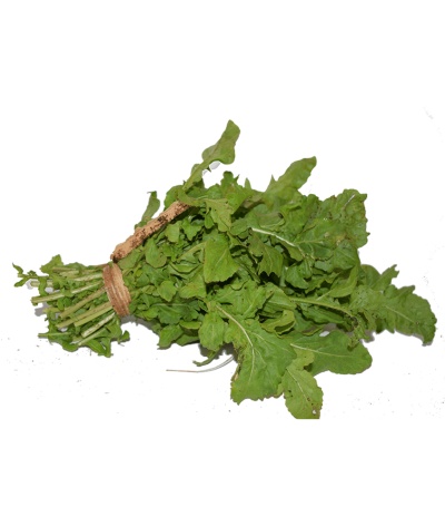 Arugula PNG High Quality Image