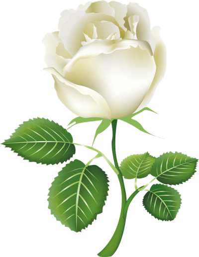 White Rose Png Image Flower White Rose Png Picture