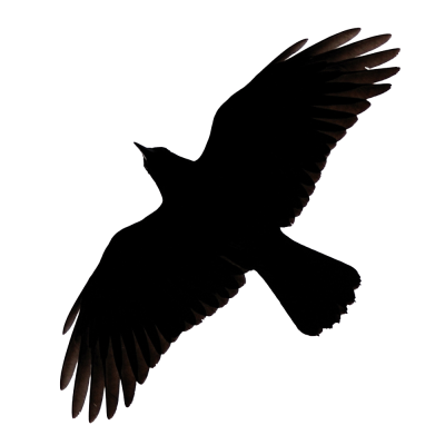 Raven Flying PNG Image