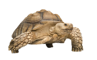 Tortoise Free Download Png