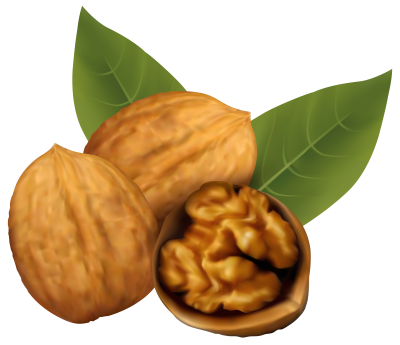 Walnuts PNG Clipart Image | Gallery Yopriceville - High-Quality ...