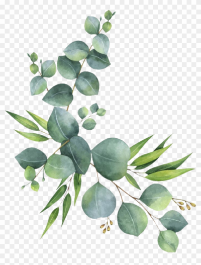 branch #leaves #florals #branches #zweig #watercolor - Eucalyptus ...
