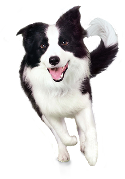 background-Dogs-Dog-transparent