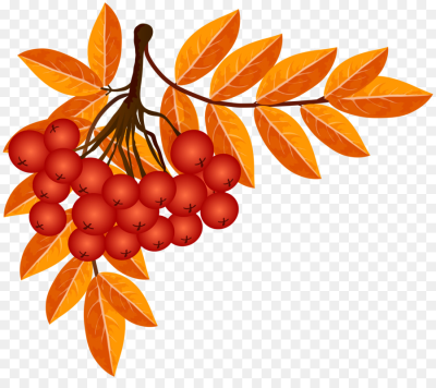 Autumn Season Weather Clip art   fall decoration png download ...