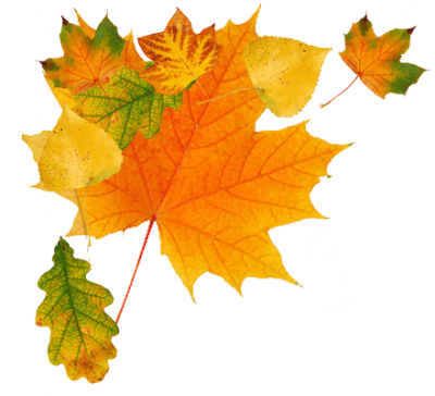 Autumn Png Leaves