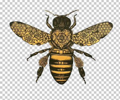 Honey Bee Drawing Bumblebee PNG, Clipart, Art, Arthropod, Art ...