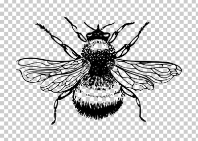 European Dark Bee Bumblebee Drawing PNG, Clipart, Art, Arthropod ...