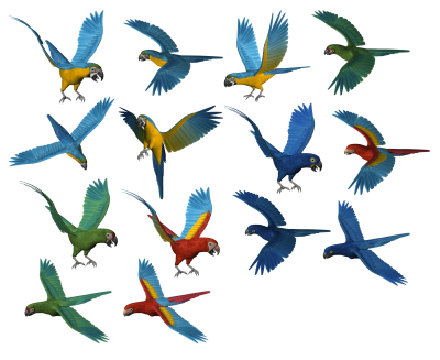 Parrot Png Images Download