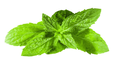 Mint Transparent Image