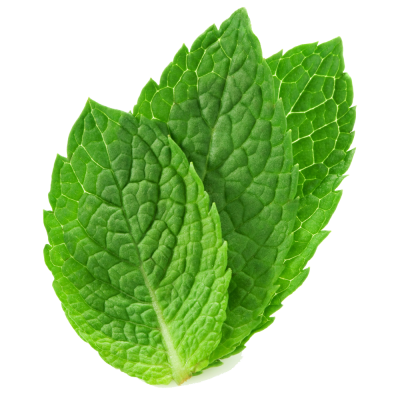 Mint PNG HD