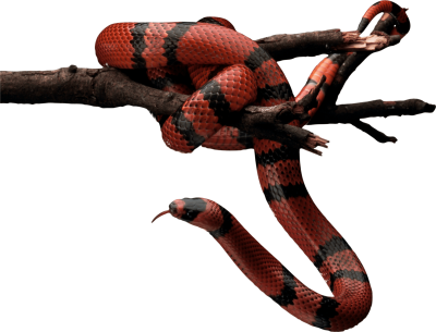 red-and-black-snake-on-tree