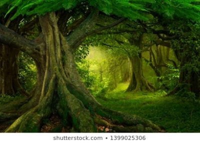 Forest Background Stock Photos, Images & Photography | Shutterstock