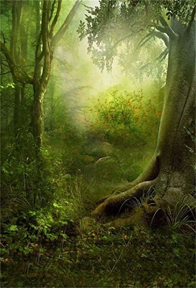 Amazon.com : AOFOTO 5x7ft Enchanted Foggy Forest Background Magic ...