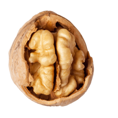 Walnut With Visible Kernel transparent PNG - StickPNG
