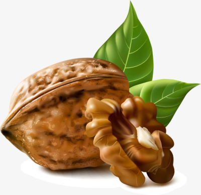 Walnut, Nut PNG and Vector for Free Download