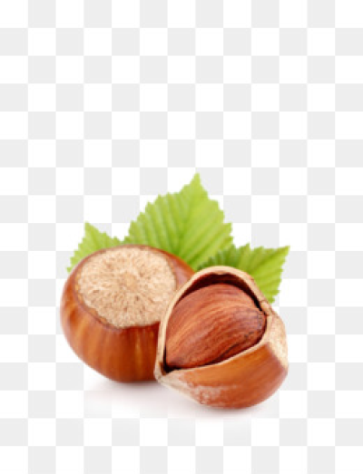 Free download Hazelnut Dried Fruit Almond Walnut - hazelnut png.