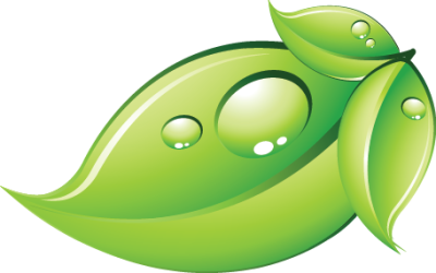 Green Leaf Free PNG HQ
