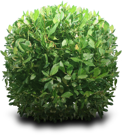 Bushes Png Hd