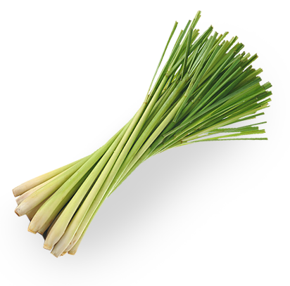 Lemongrass Png (99+ images in Collection) Page 3
