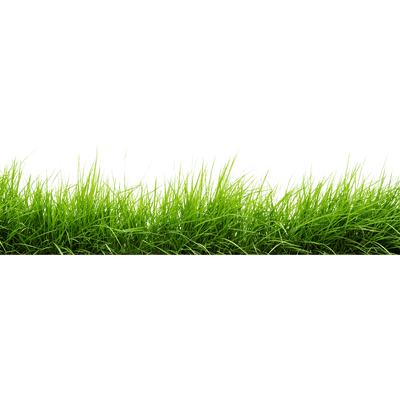 Line Of Grass transparent PNG - StickPNG
