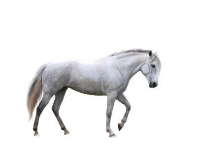 horse-background-picture-transparent